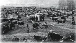 Reinosa. Ferial de ganado vacuno