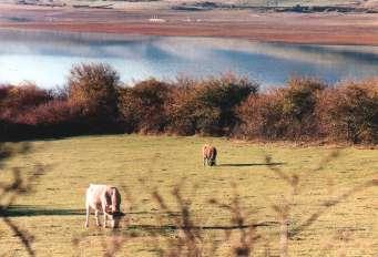 Panorámica del pantano del Ebro