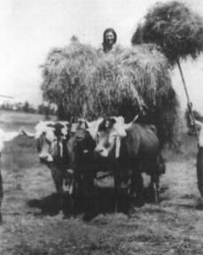 Carro de hierba