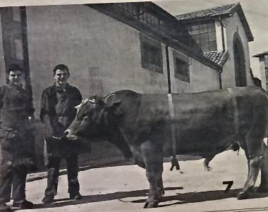 toro comprado en las afueras de la Plaza de Abastos